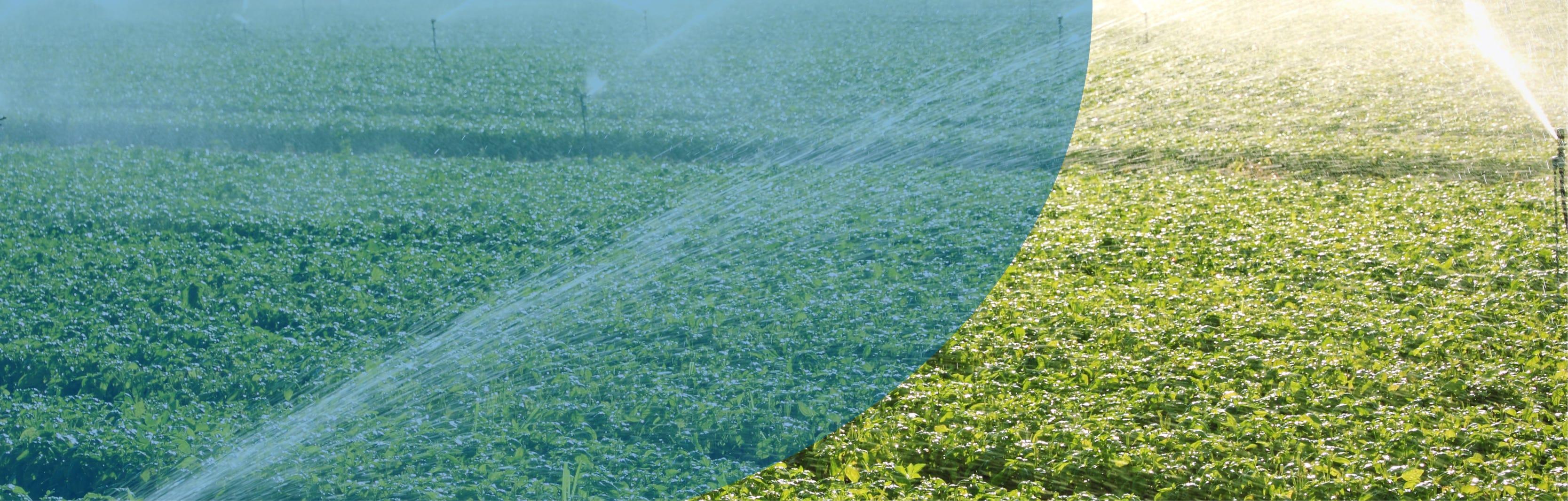Recoltech système d'irrigation