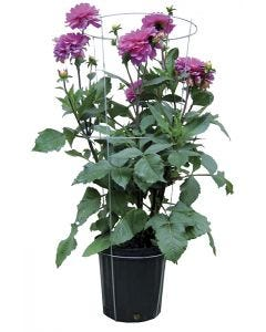 """Multi-Formes 32"""" Balcony-plant cage"""