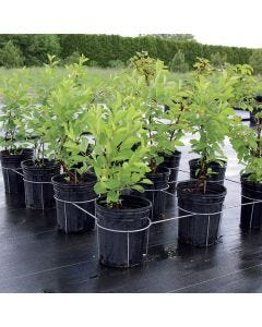 Multi-Formes Support for 6 nursery pots 14.8 L to 17.7 L